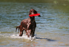 Playing dog Stock Images