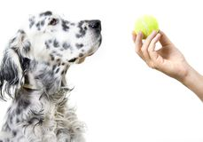 Playing with dog Royalty Free Stock Images