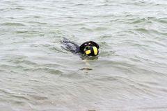 Playing dog on the Baltic Sea. Beach Royalty Free Stock Image