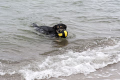 Playing dog on the Baltic Sea Stock Photos
