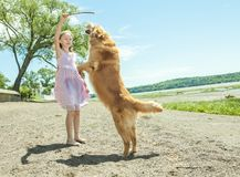 Playing with dog Stock Photos