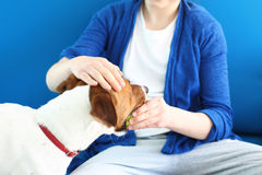Playing with a dog. Stock Photography