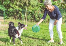 Playing with the dog. Middle age woman playing with her border collie dog in the park. throwing frisbee royalty free stock photography