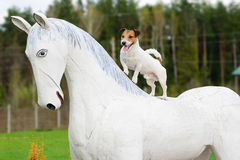 Playing dog riding white horse standing  horseback Royalty Free Stock Photos
