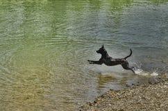Playing dog Royalty Free Stock Photo