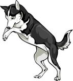 Playing dog. Vector drawing fun game dog Royalty Free Stock Images