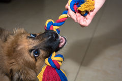 Playing dog Royalty Free Stock Photo