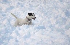 Playing dog Royalty Free Stock Image
