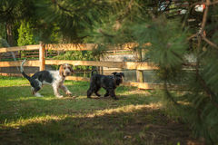 Playing dogs in autumnal park Royalty Free Stock Photography
