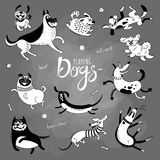 Playing dogs. Funny lap-dog, happy pug, mongrels and other breeds. Set of vector drawings for design vector illustration