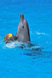 Playing dolphin. Dolphin playing with ball in dolphinarium Stock Photo