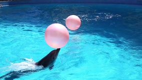 Playing dolphin. stock footage