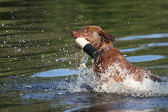 Playing fetch Stock Image