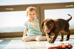 Playing fetch with my puppy. Cute little girl playing fetch with his brown Labrador at home stock images