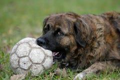 Playing football stock photography