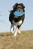 Playing frisbee Royalty Free Stock Photo