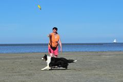 Playing Frisbee with Australian Shepherd Royalty Free Stock Photo
