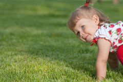 Playing on the grass Stock Photography
