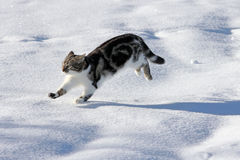 Free Playing In The Snow Gives Pleasure Stock Photos - 33185523