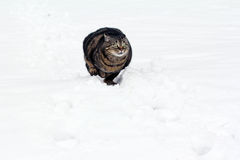 Free Playing In The Snow Gives Pleasure Stock Photos - 37263213