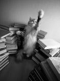 Playing kitten Royalty Free Stock Image