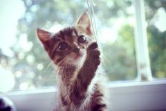 Playing kitten Stock Photos