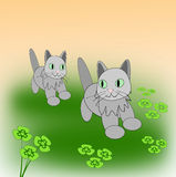 Playing Kittens. Two little cats playing on a clover meadow Stock Photography