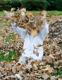 Playing in the leaves. Four year old child playing in the autumn leaves Royalty Free Stock Image