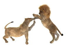 Playing Lions Stock Images