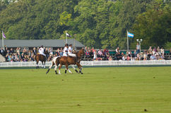 Playing a polo match Stock Images