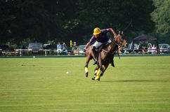 Playing polo Stock Photos