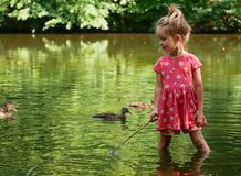 Playing in the pond with ducks. royalty free stock image