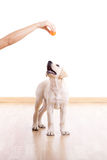 Playing with a puppy royalty free stock photography