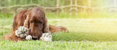 Playing puppy banner Stock Photo
