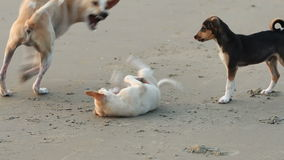 Playing puppy's Royalty Free Stock Image