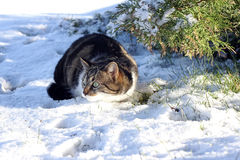 Playing in the snow gives pleasure Royalty Free Stock Photos