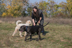 Playing some games with dogs. Girl and her dogs during a dressage Stock Photography