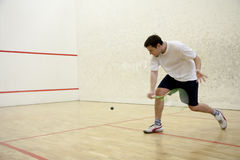 Playing squash. Squash player in action on court Stock Image