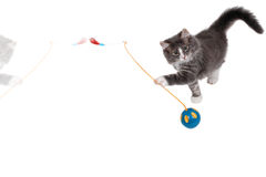 Playing time for cute kitten 2 Royalty Free Stock Image