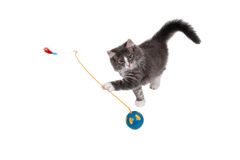 Playing time for cute kitten 3 Stock Photo