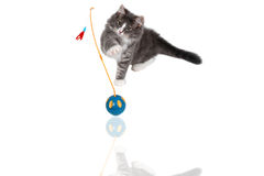 Playing time for cute kitten 7 Stock Photography
