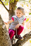 Playing on tree Royalty Free Stock Photography