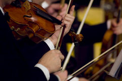Playing violin. A night at the symphony concert - playing violins royalty free stock photography