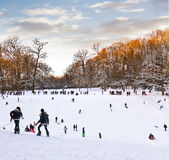 Playing in a winter park. Stock Images