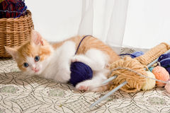 Playing with wool. Six weeks old kitten being naughty with knitting wool Stock Image