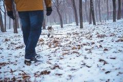 Playingin del perro del dogo francés el invierno con el hombre Fotos de archivo libres de regalías