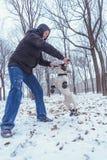 Playingin del perro del dogo francés el invierno con el hombre Fotografía de archivo