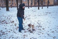 Playingin del perro del dogo francés el invierno con el hombre Fotos de archivo