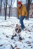 Playingin del perro del dogo francés el invierno con el hombre Foto de archivo