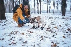 Playingin del perro del dogo francés el invierno con la mujer Fotografía de archivo libre de regalías